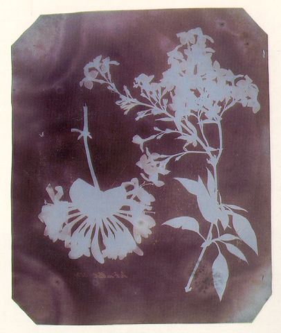 """William Henry Fox Talbot, """"Flowers, Leaves, and Stem"""", c.1838. Photogramme."""